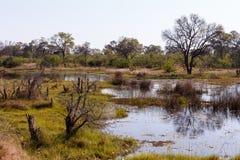 Landscape in the Okavango swamps Royalty Free Stock Image