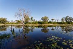 Landscape in the Okavango swamps Stock Image
