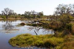 Landscape in the Okavango swamps Stock Photos