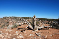 Landscape of old dry tree in Grand Canyon Royalty Free Stock Photos