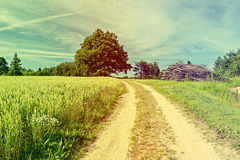 Landscape with old oak tree and countryside road Royalty Free Stock Photography