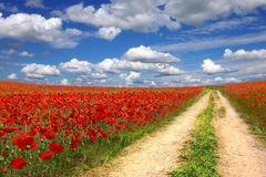 Landscape with old road on the poppies plantation Royalty Free Stock Photo