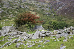 Landscape of old stone farmhouse and hawthorn bush and stone wal Royalty Free Stock Images