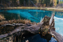 Landscape with old stump and blue lake. Altay Mountains. Russia. royalty free stock images