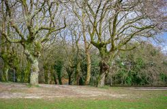 Landscape of old trees Stock Images