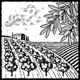 Landscape with olive grove black and white. Retro landscape with olive grove in woodcut style. Black and white  illustration with clipping mask Stock Images
