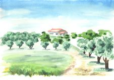 Landscape with olive grove. Hand drawn watercolor and background. Landscape with olive grove. Hand drawn watercolor and background Royalty Free Stock Photography