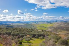 Landscape with olive grove in the spring royalty free stock photos
