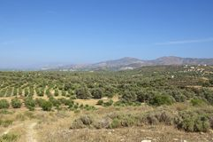 Landscape and Olive Trees in south Crete Stock Image