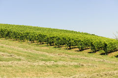 Landscape in the Oltrepo Pavese (Italy). Landscape in the Oltrepo Pavese (Pavia, Lombardy, Italy) at summer royalty free stock image