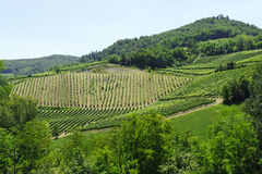 Landscape in the Oltrepo Pavese (Italy) Royalty Free Stock Image