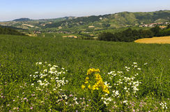 Landscape in the Oltrepo Pavese (Italy) Stock Images