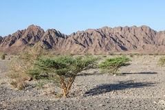 Landscape in Oman Royalty Free Stock Photography