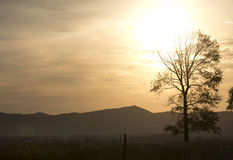 Landscape of one tree in sunset Royalty Free Stock Image