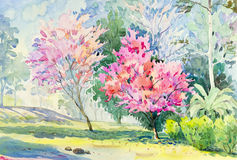 Landscape original colorful of Wild Himalayan Cherry flower tree Stock Image