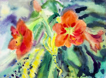 Landscape original painting on paper colorful of Amaryllis flowers. Royalty Free Stock Photo