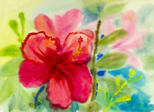 Landscape original painting on paper colorful of Chinese rose flower. Stock Photos