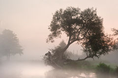 Landscape over foggy river Stock Photo