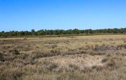 National swamp of Vila Real de Santo Antonio in porugal. Landscape overview of swamp Vila Real de Santo Antonio Royalty Free Stock Images