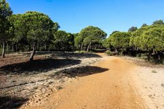 National park Vale do Guadiana forest path in portugal. Landscape overview Vale do Guadiana forest in portugal Royalty Free Stock Photography