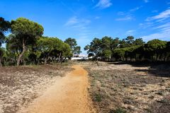 National park Vale do Guadiana forest path in portugal. Landscape overview Vale do Guadiana forest in portugal Royalty Free Stock Image