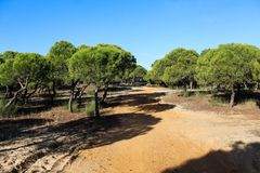 National park Vale do Guadiana forest path in portugal. Landscape overview Vale do Guadiana forest in portugal Stock Image