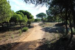 National park Vale do Guadiana forest path in portugal. Landscape overview Vale do Guadiana forest in portugal Stock Images