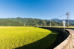 Landscape of paddy farm Royalty Free Stock Image