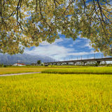 Landscape of paddy farm under blue sky in Hualien Stock Photos