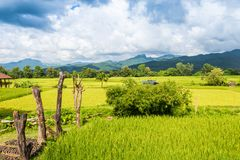 Landscape of Paddy field and Mountain under the blue sky in sunshine day. At Pua district, Nan province, Thailand Royalty Free Stock Image