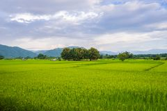 Landscape of Paddy field and Mountain under the blue sky in sunshine day. At Pua district, Nan province, Thailand Royalty Free Stock Photo