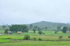 Landscape of paddy field in rainy day, Agriculture scene Stock Photos