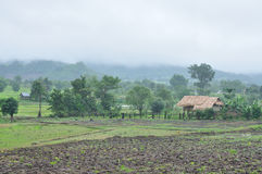 Landscape of paddy field in rainy day, Agriculture scene Stock Image