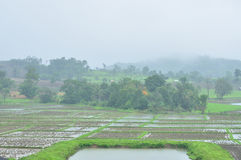 Landscape of paddy field in rainy day, Agriculture scene Stock Photo