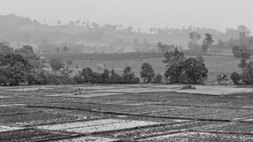 Landscape of paddy field in rainy day, Black and white photography Stock Photos