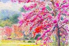 Landscape painting colorful of Wild Himalayan Cherry Stock Photos