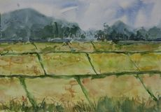 Landscape painting of gold rice field. Watercolor painting, hand painted Royalty Free Stock Photography