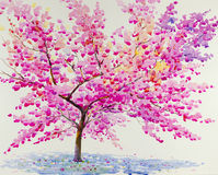 Landscape painting red,pink color of Wild Himalayan Cherry  flower Stock Image