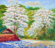 Landscape painting white color of crescent flower white royalty free stock photo