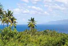 Landscape with palm tree and sea. Blue sky view with coco palm trees. Stock Photos