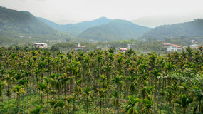 Landscape of the palm tree valley Royalty Free Stock Images