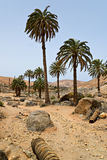 Landscape with Palm Trees Royalty Free Stock Photos