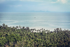Landscape with palm trees on beach at tropical sea Stock Images