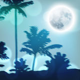 Landscape with palm trees and full moon at night Stock Photography