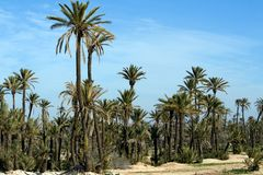 Landscape with Palm trees near Marrakech Royalty Free Stock Photography