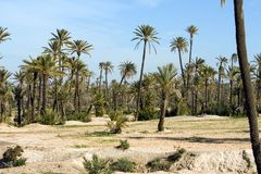 Landscape with Palm trees near Marrakech Stock Image