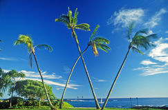 Landscape of Palm Trees with ocean, Kauai, HI Royalty Free Stock Photo
