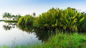 Landscape with palm trees Stock Photo