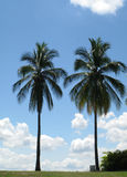 Landscape with palms Royalty Free Stock Images