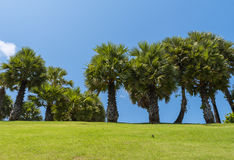 Landscape of palms on the hill. Beautiful landscape view of palms on the hill stock photo